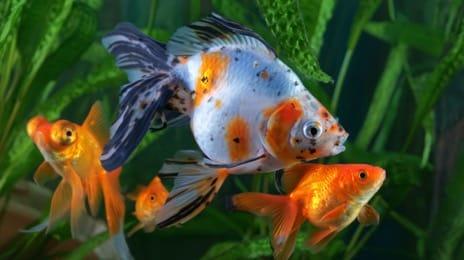 Товары для аквариумных рыбок