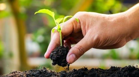 Семена, саженцы и посевные материалы
