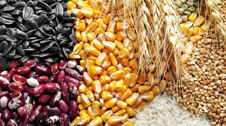 Cereal crops, bean cultures, oilseeds
