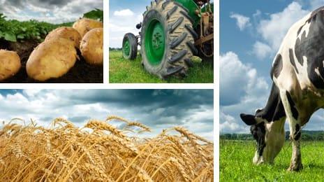Сельское хозяйство, прочее